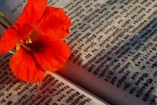 red flower on book